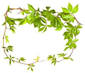 wild vine twig frame