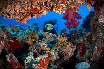 Woman scuba diver exploring soft corals.