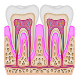 The intersection of the tooth poster