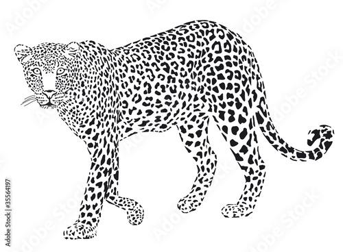 leopard noir et blanc tableaux sur toile tableaux et posters. Black Bedroom Furniture Sets. Home Design Ideas