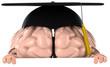 Cerveau et études