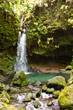 Stream with Waterfall in Lush Jungle