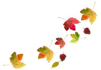 bunte Ahornblätter fallen im Herbst