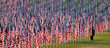 Flags in the Healing Fields for 9/11