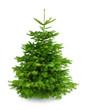 Perfekter dichter Tannenbaum auf weiß - 35574121