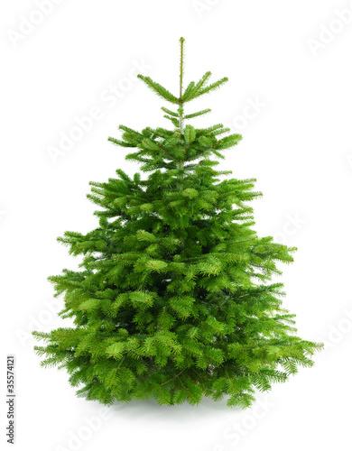 Leinwanddruck Bild Perfekter dichter Tannenbaum auf weiß