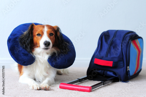 A Dog with Blue Suitcase and Blue Neck Pillow