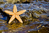 Starfish on the rock in the sea water