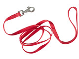 Red nylon dog lead or leash isolated over white poster