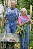 Retraité actifs - Récolte de légumes