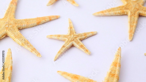 Sea stars with little in middle horizontally rotate