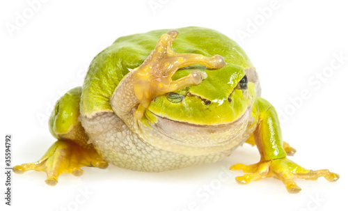 Foto op Aluminium Kikker one tree frog isolated on white background
