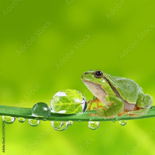 Fototapeten,frosch,laubegg,fallen aufsteigen,kondenswasser