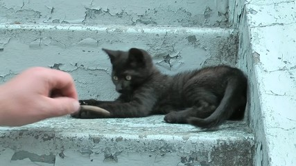 young playing kitten