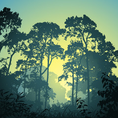 A Forest Landscape with Trees and Sunset Sunrise