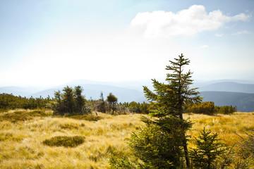Beautiful summer landscape in the czech mountain krkonose
