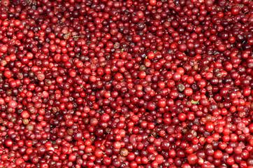 Preiselbeeren / Cranberries