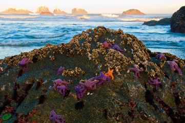 Starfish on Rocks with Sea Stacks
