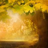 Fototapeta jesienny - tło - Las