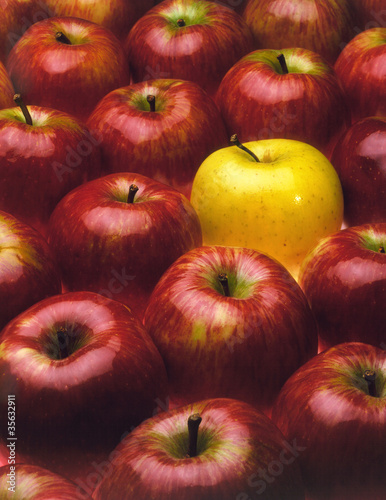 red apples with the exception of a yellow apple
