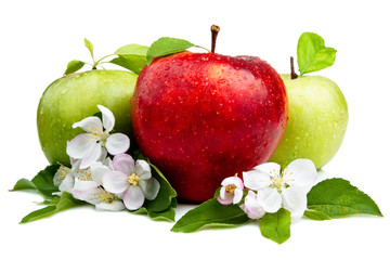 Red Apple in Front of Two Green Apples with flowers, Leaf and wa