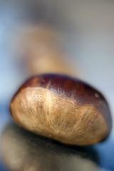 Macro closeup chestnut