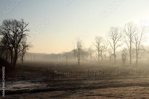 Fototapeten,landschaft,szene,nebel,morgens
