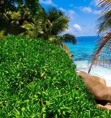 Paradise Scene Beauty