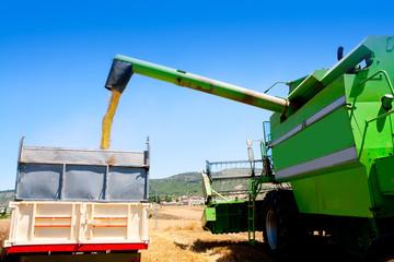 Combine harvester unloading wheat in truck