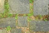 un-kept garden paving slabs and weed vegetation poster