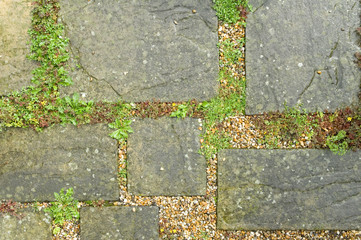 un-kept garden paving slabs and weed vegetation