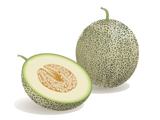 Melon Fruit
