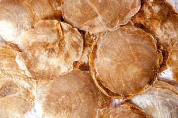 mother of pearl brown round shells