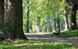 Fototapeten,landschaft,park,straßen,straße