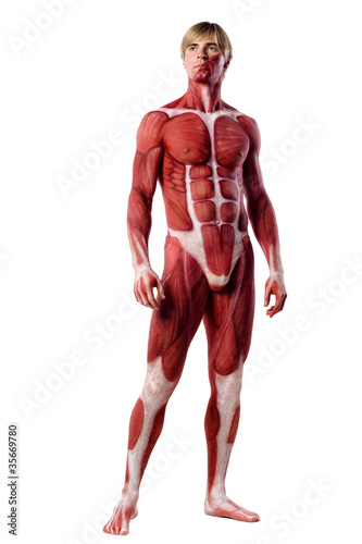 muscle man front view