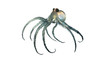 deep sea octopod isolated on white