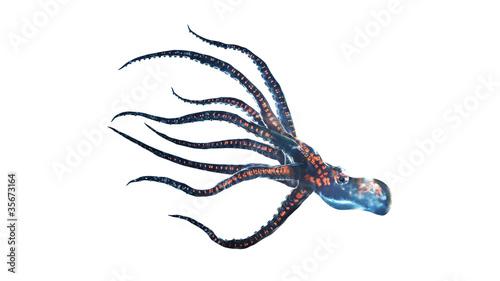 deep sea octopus isolated on white