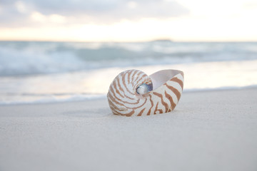nautilus shell at the sea wave and sunrise