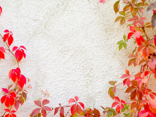 Red creeper plant on wall