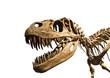 Leinwandbild Motiv Esqueleto de tiranosaurio Rex