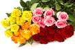 Farbige Rosen