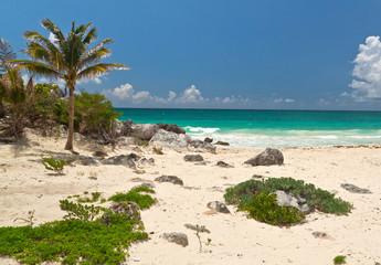 Palm tree on the idyllic beach of Tulum - Mexico