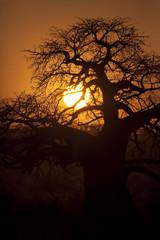 Tarangire Sunset 6549