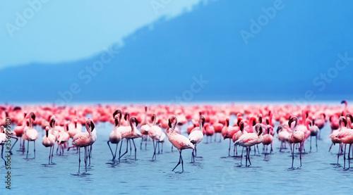 Fotobehang Flamingo African flamingos