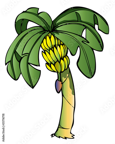 Banana tree_2