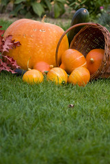 Pumpkins on grass
