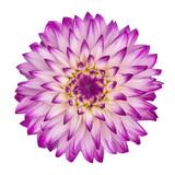 violet/white dahlia