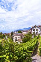 Vineyards in Montreux Town, Switzerland