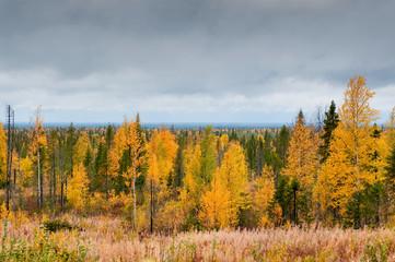 Taiga (boreal forest), Komi region, Russia.