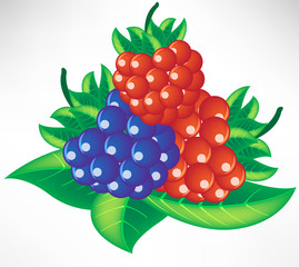 assorted berry